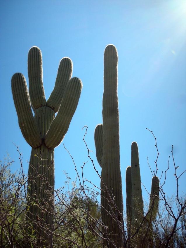 Catalina State Park - Tucson, AZ