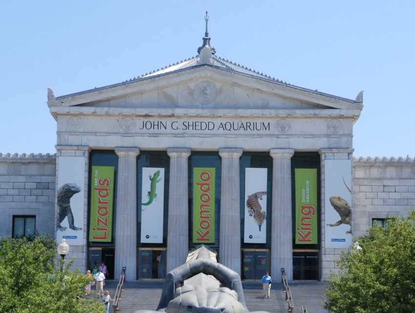 Shedd Aquarium Chicago Tourist Attractions