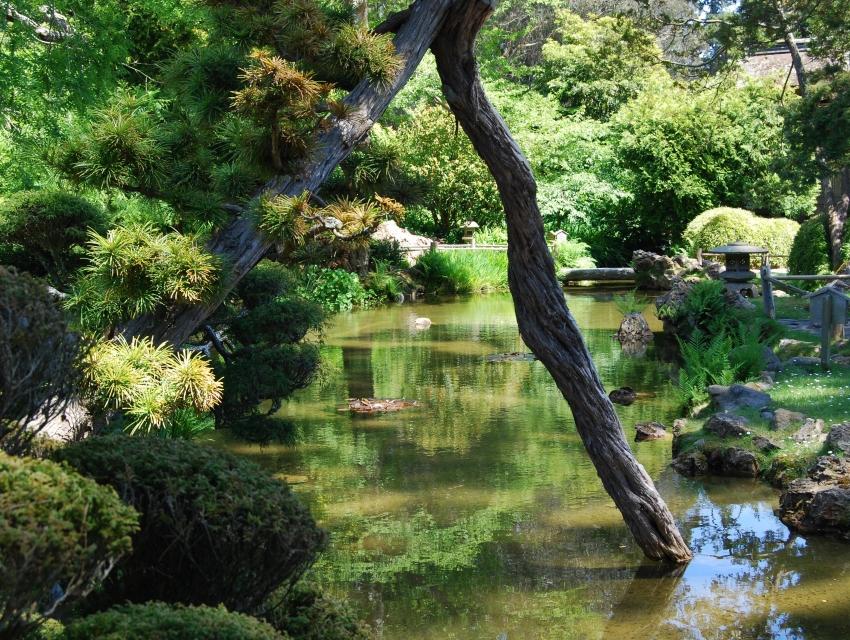 San Francisco Botanical Garden San Francisco Tourist Attractions Sightseeing Eventseeker