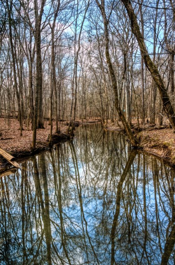 Bledsoe Creek State Park - Gallatin, TN