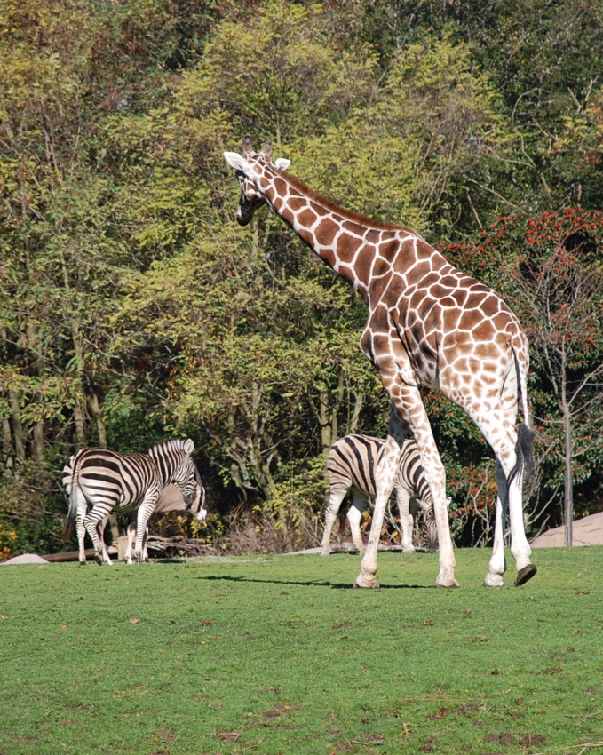 Woodland Park Zoo - Seattle, WA