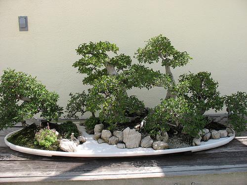 united states national arboretum washington cityseeker. Black Bedroom Furniture Sets. Home Design Ideas