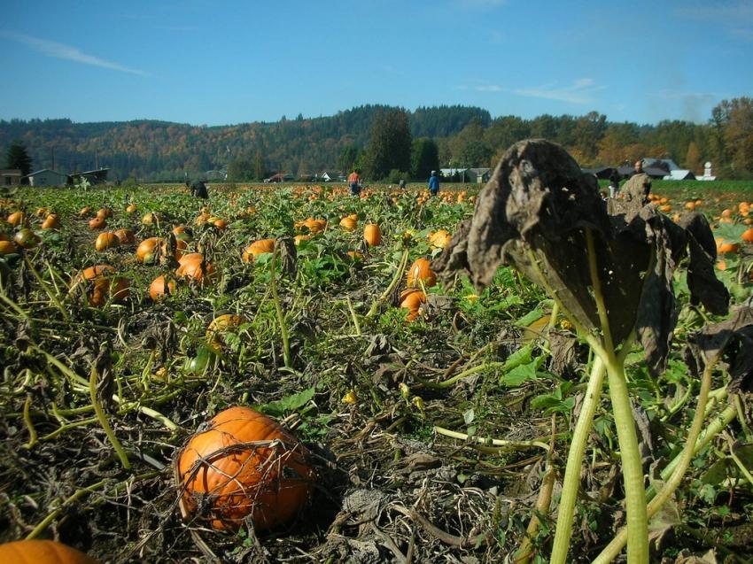 Remlinger Farms - Carnation, WA