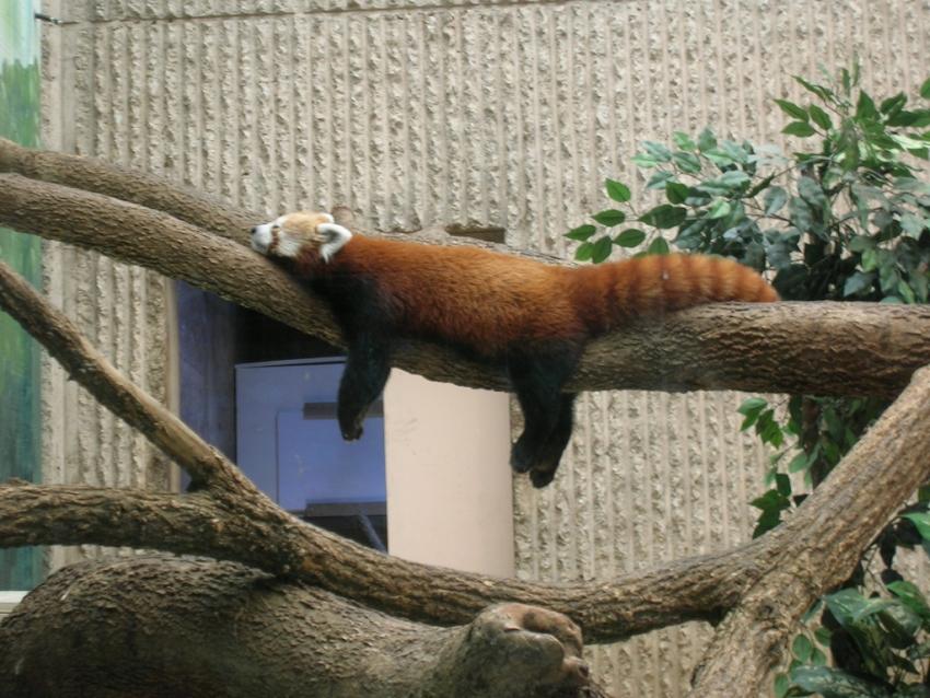 Kansas City Zoo - Kansas City, MO