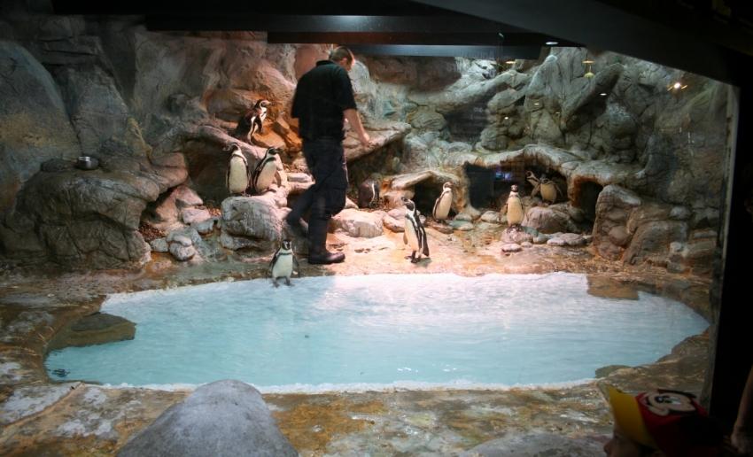 Aquarium Of Niagara Niagara Falls Cityseeker