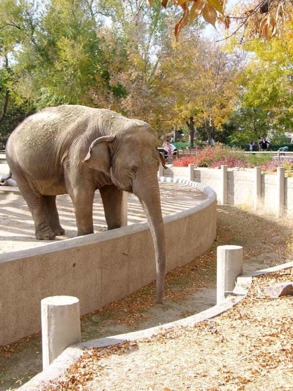 Denver Zoo - Denver, CO