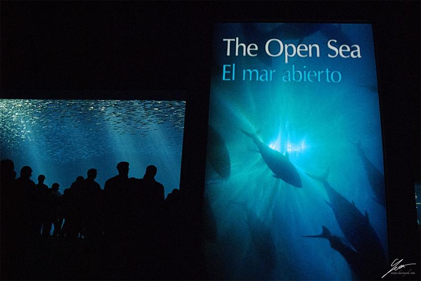 Monterey Bay Aquarium - Monterey, CA