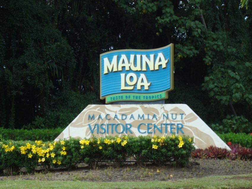 Macadamia Nut Farm Big Island Tour