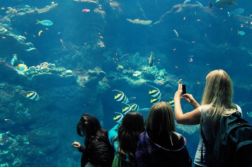 Steinhart Aquarium San Francisco Cityseeker