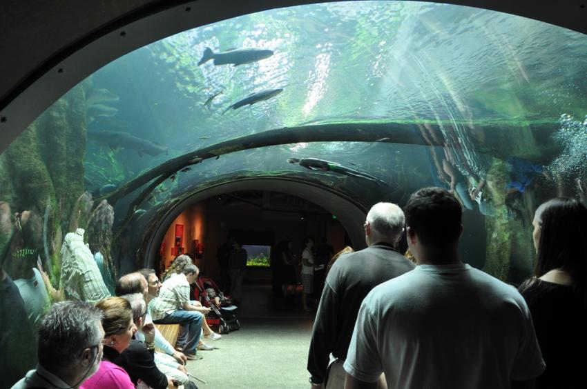 Steinhart aquarium san francisco cityseeker for Aquarium washington dc