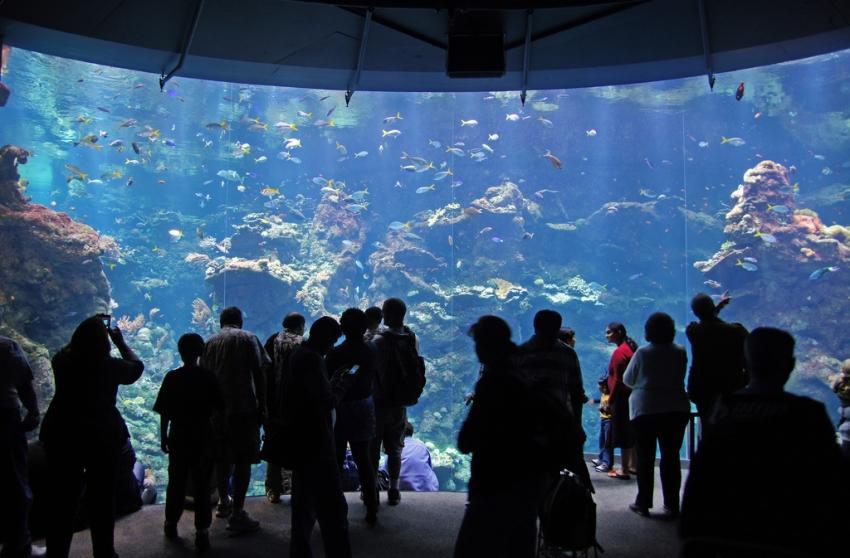 Steinhart Aquarium San Francisco Tourist Attractions