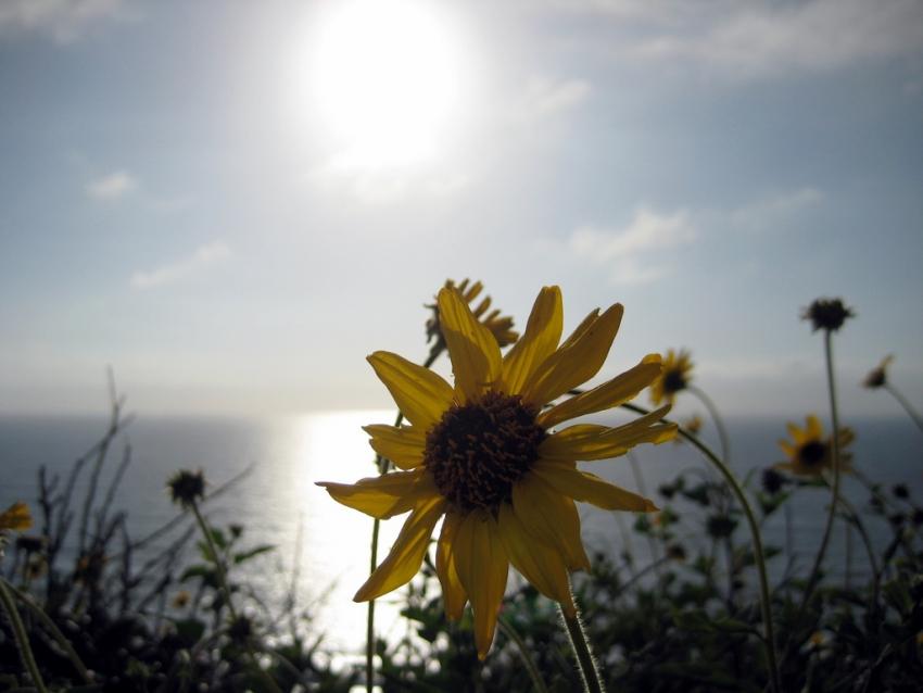 Torrey Pines State Reserve - La Jolla, CA