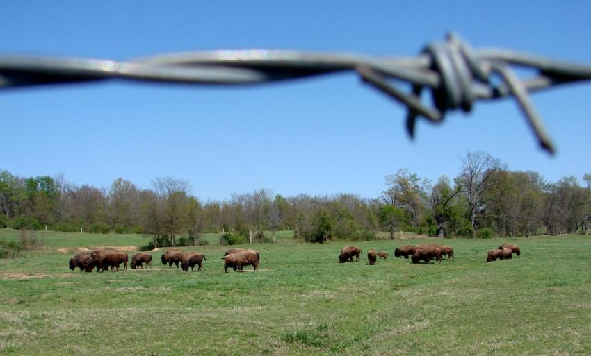 Shelby Farms Park Conservency - Memphis, TN