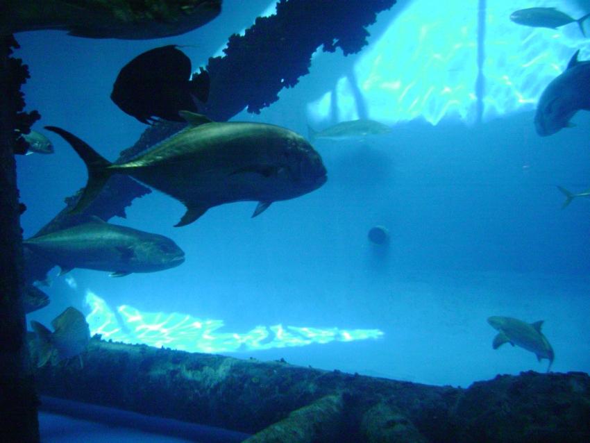 Texas State Aquarium Corpus Christi Tx