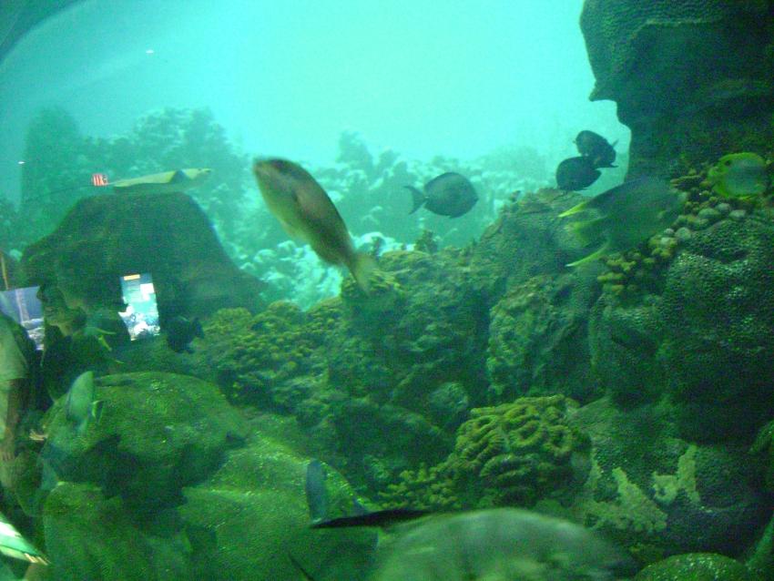 Texas State Aquarium - Corpus Christi, TX