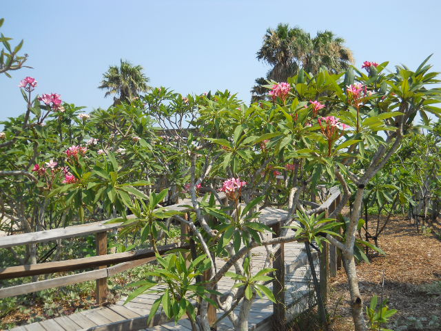 South Texas Botanical Gardens Nature Center Corpus Christi Cityseeker