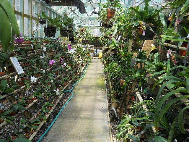 South Texas Botanical Gardens Nature Center Corpus Christi Tourist Attractions