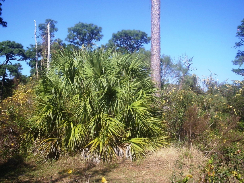 Florida Botanical Gardens Largo Tourist Attractions Sightseeing Museums Galleries