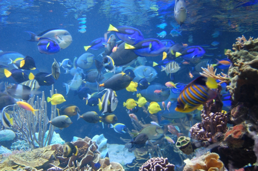 Atlantis Marine World Aquarium Riverhead Tourist