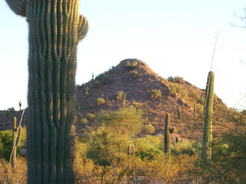 Desert Botanical Garden - Phoenix, AZ