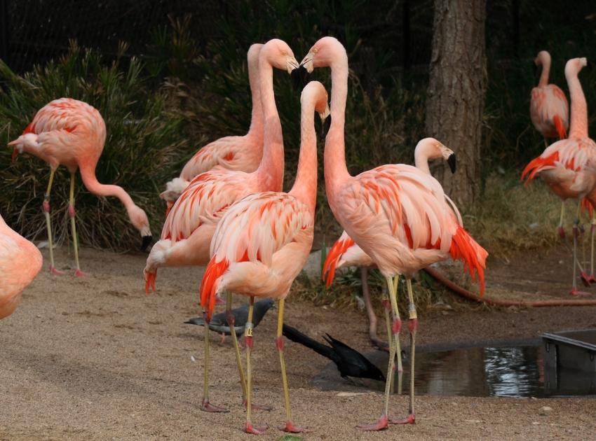 Phoenix Zoo - Phoenix, AZ