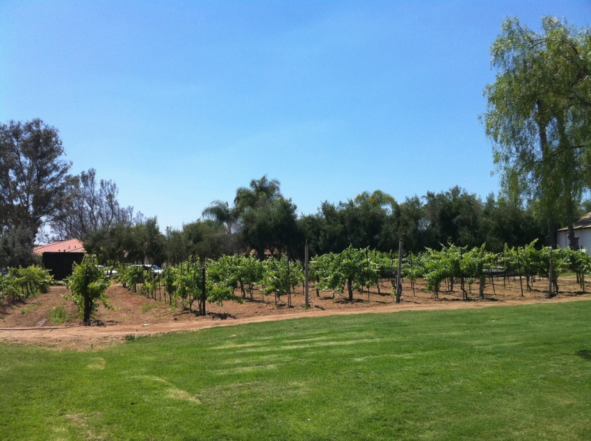 Bernardo Winery - San Diego, CA