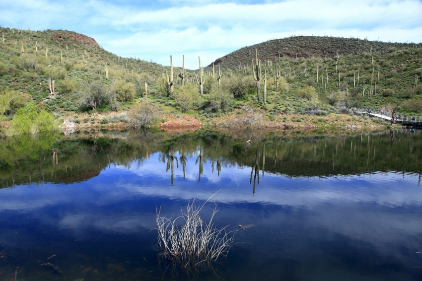 Saguaro lake mesa tourist attractions sightseeing for Saguaro lake fishing