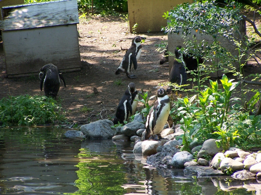 Philadelphia Zoo, The - Philadelphia, PA