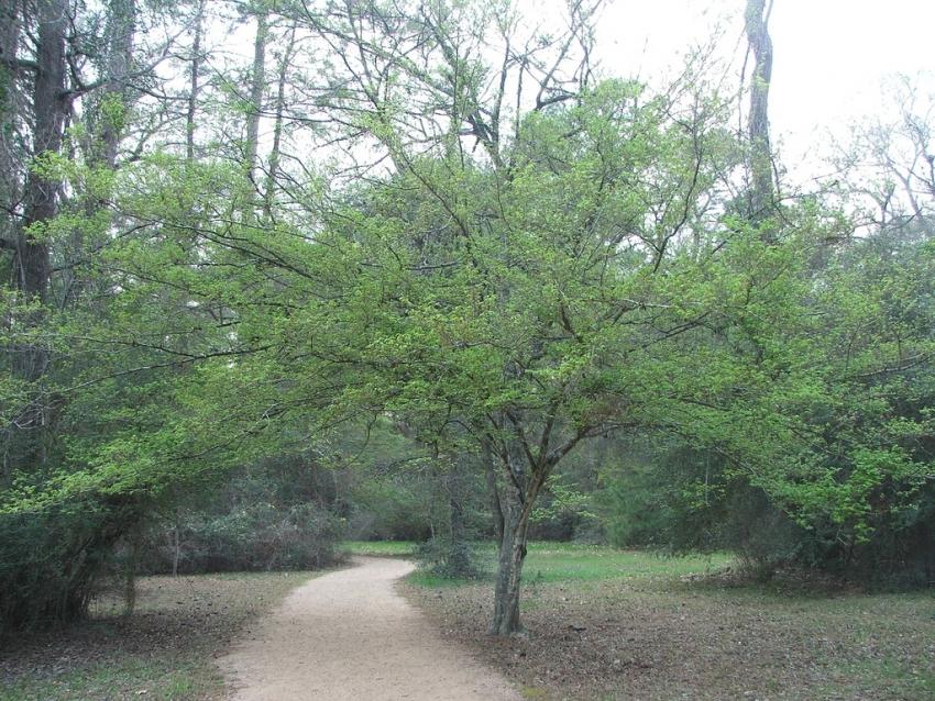 Houston Arboretum & Nature Ctr - Houston, TX