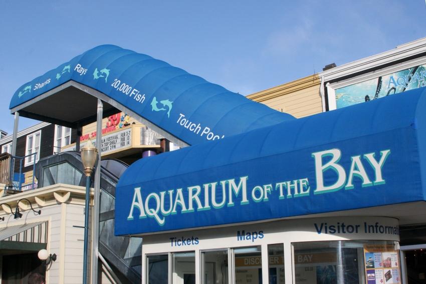 Aquarium Of The Bay San Francisco Tourist Attractions