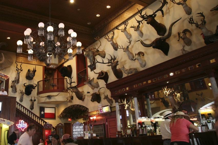 Buckhorn Cafe San Antonio Tx