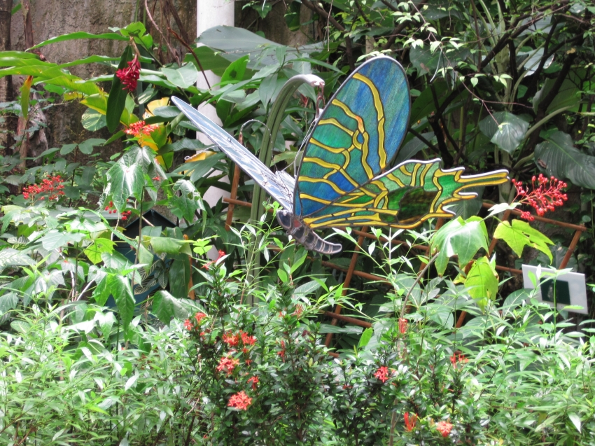 Bangkok Butterfly Garden Insectarium Bangkok Cityseeker