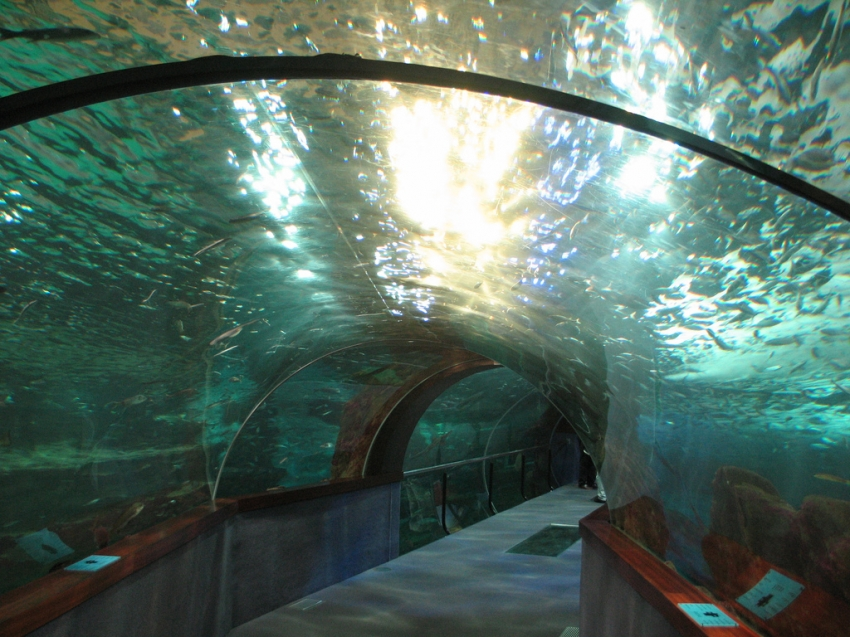 aquarium palacio del mar de donostia san sebasti n san sebastian tourist attractions. Black Bedroom Furniture Sets. Home Design Ideas