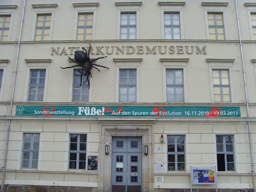 Restaurants Near The Museum Of Natural History Washington Dc