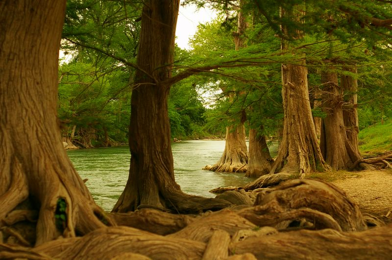 Guadalupe River State Park - Spring Branch, TX