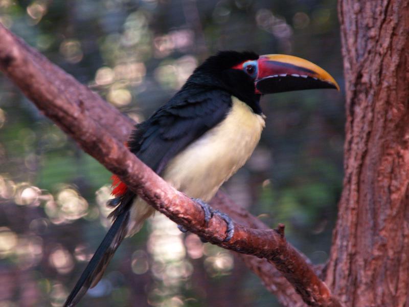 Reid Park Zoo - Tucson, AZ