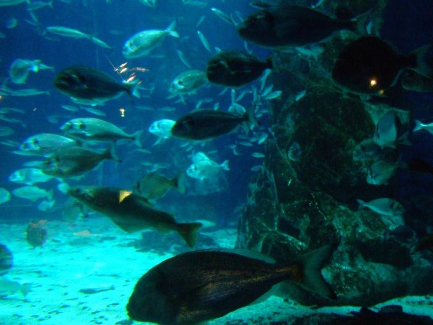 SEA LIFE London Aquarium, London, CitySeeker